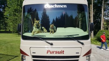 dogs, camping, rv, camper, labor day, halloween