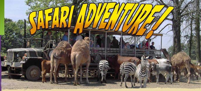 safari-adventure